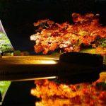 Iluminación- jardines- Rikugi-en